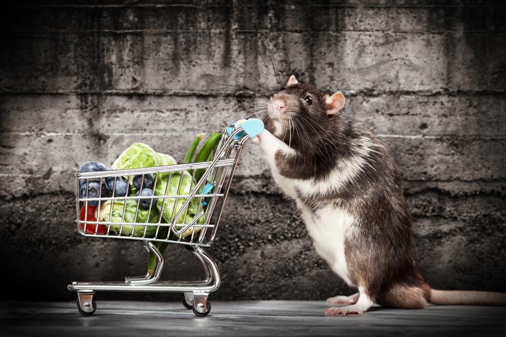rat shop
